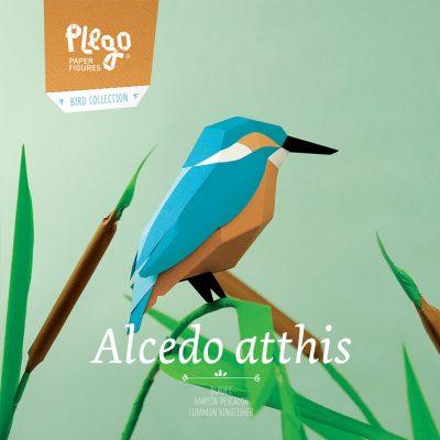 alcedo_atthis